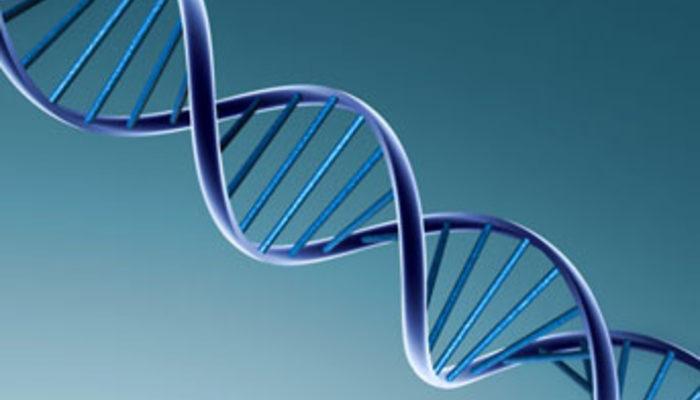 Genetik: Der Fluch der Inzucht DiePressecom