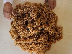 Ünü ülke geneline yayılan yapışkan özelliği, tadı ve aroması diğer saleplerden farklı olan Bucak salebinin kilosu, 600 liraya ulaştı.
