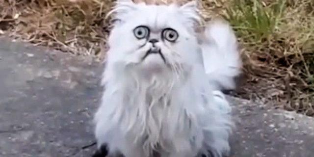 Bakışlarıyla garip olan kedi sosyal medyayı salladı