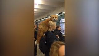 Metroda ilginç görüntü