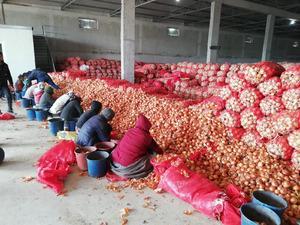 Bakanlık peşlerinde! Soğan fiyatını arttırmak için depoya hapsettiler