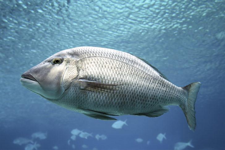 Rüyada balık görmek ne demektir, ne anlama gelir? - Mynet trend