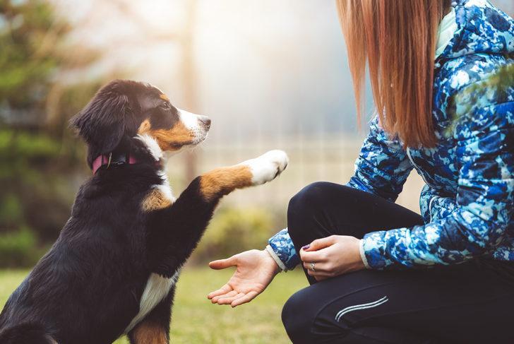 İlk Defa Köpek Sahipleneceklerin Mutlaka Bilmesi Gereken Temel Bilgiler