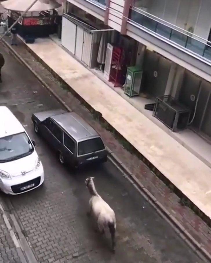 Otomobilinin arkasına atı bağlayan sürücüye 102 TL ceza