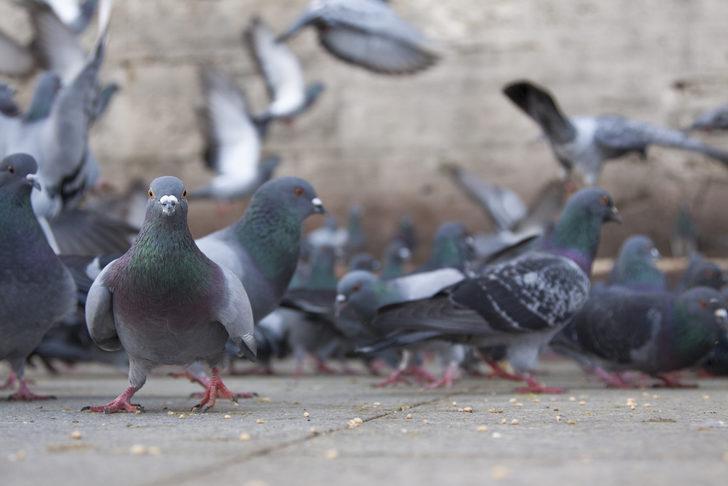 Rüyada Güvercin Görmek Ne Demektir Güvercin Görülen Rüyalar Neye