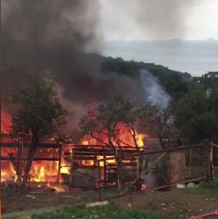 Büyükada'da ormanlık alanda yangın (2)