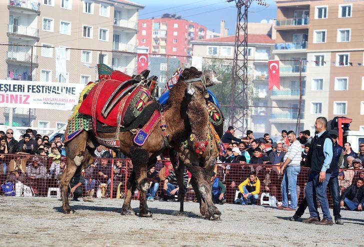 HAYTAP, Çiğli'deki Deve Güreşleri Festivali'nin iptalini istedi