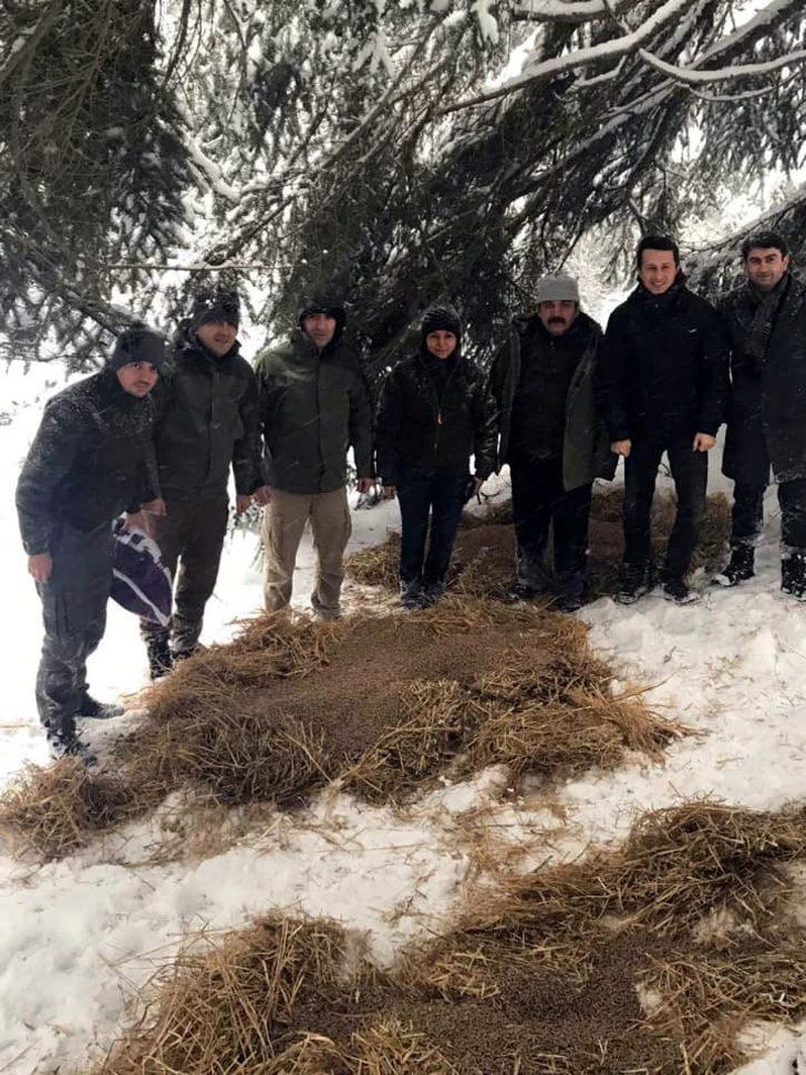 Bolu'da yaban hayvanları için doğaya yem bırakıldı