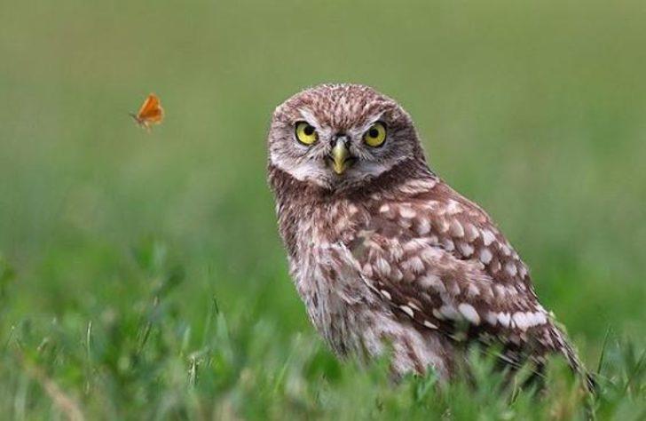 Rüyada kuş görmek ne anlama gelir? Kuş görmekle alakalı rüyalar nasıl tabir edilir?