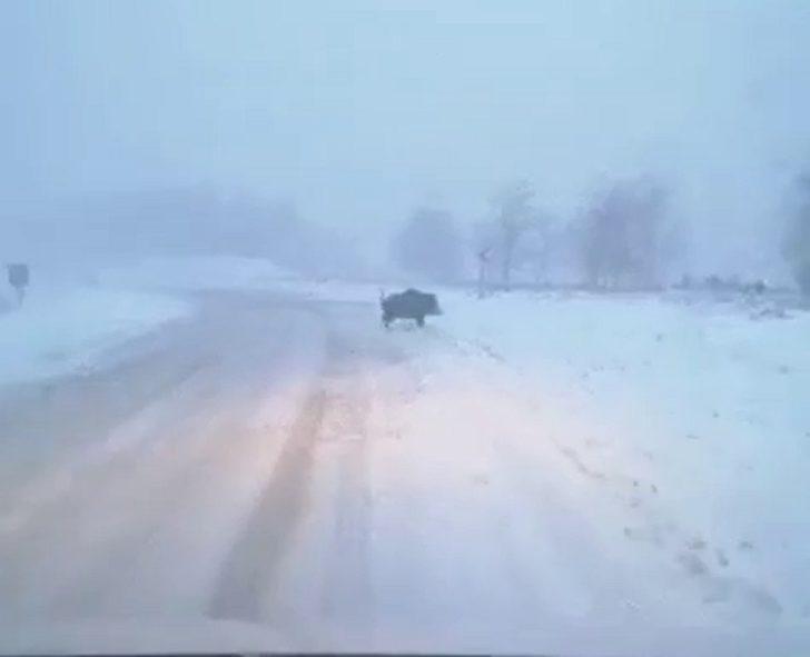 Karda yiyecek bulamayan domuz ilçeye indi