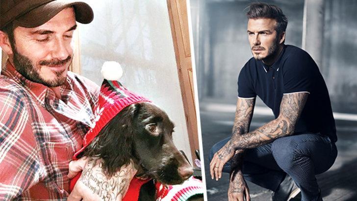 Beckham'ın köpeğinin battaniyesinin fiyatı şoke etti