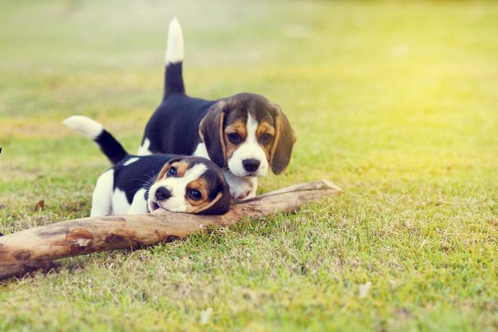 Barınak skandalı: Yüzlerce köpek yer kalmadığı için uyutuldu
