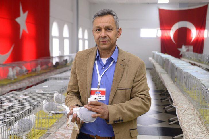 Kemalpaşa'da 'güvercin güzellik yarışması'