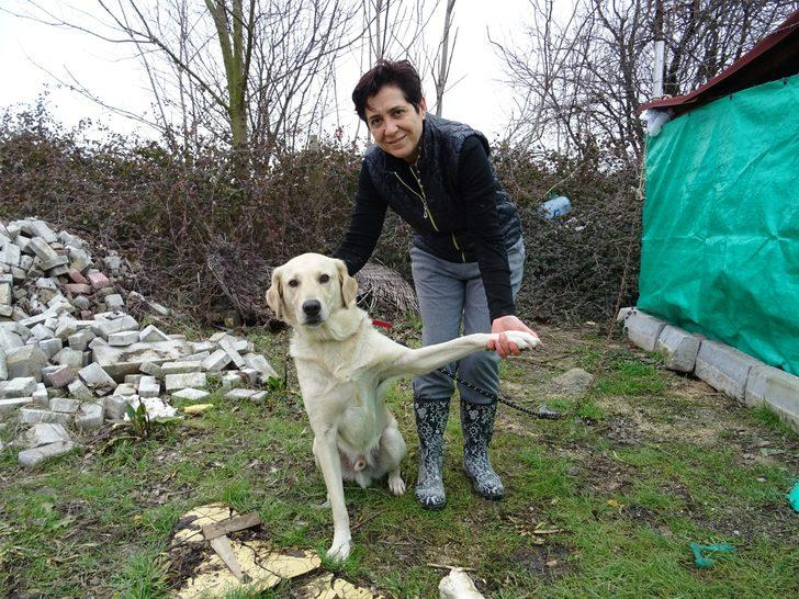 Babasının öldürdüğü Diğdem'in köpeği 'Şans'a hayvanseverler sahip çıktı