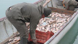Balıkçıların yeni umudu!
