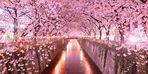 Japonya'daki kiraz çiçeklerini görebilmeniz için en iyi bölgeler
