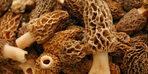 Doğada nadir bulunuyor! Prostat kanserine karşı kalkan oluyor...