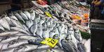 Bu da oldu! Balıkların solungaçlarını boyayıp...