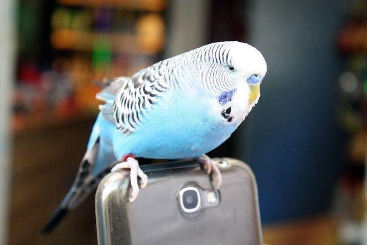 Rüyada Muhabbet Kuşu Görmek Ne Demek Rüyada Muhabbet Kuşu Görmek
