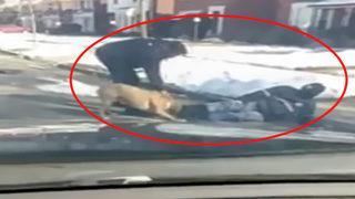 Vahşi pitbull postacıya saldırdı!