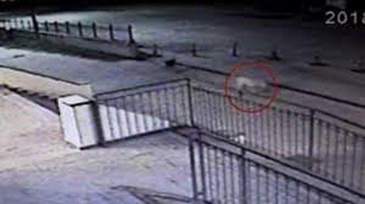 Söke'deki AVM'de köpeklerin bulduğu bebek cesedi olayı aydınlatıldı