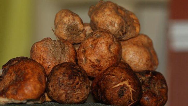 Saklı kalmış protein deposu domalan mantarı faydaları