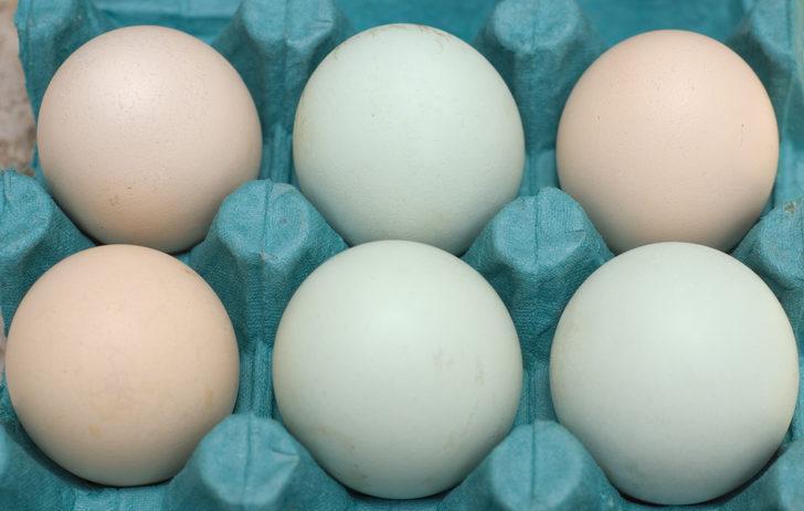 Sadece beyaz ve kahverengi yumurtalar var
