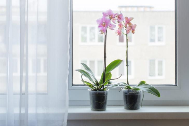 Orkide bakımı nasıl yapılır? Orkide budama, sulama ve evde bakım için ipuçları!