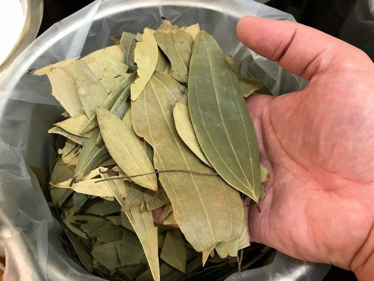 Türkiye'den Avrupa'ya 14 bin ton defne yaprağı ihracatı