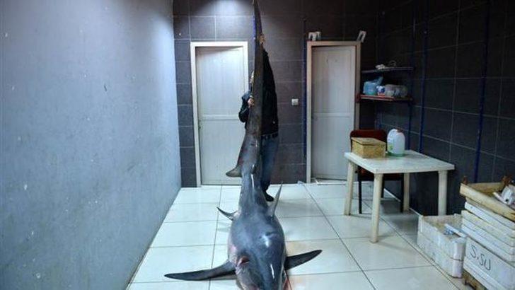 Mersin'de yakalandı! Boyunu gören inanamadı, tam 6 metre