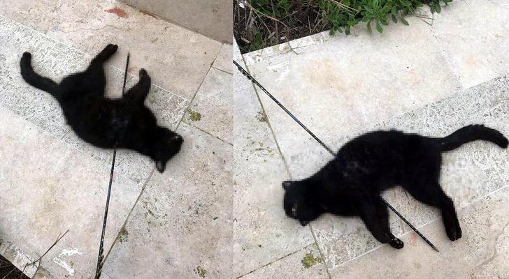 Urla'da vahşet! Kediyi okla vurdular