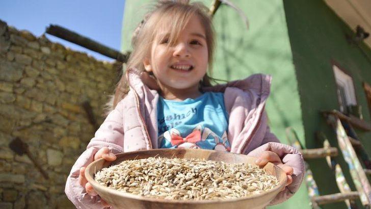 Kastamonu'da çocuklar siyez buğdayını hamur işi yaparak tanıyor
