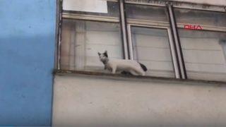 Kedi için seferber oldular