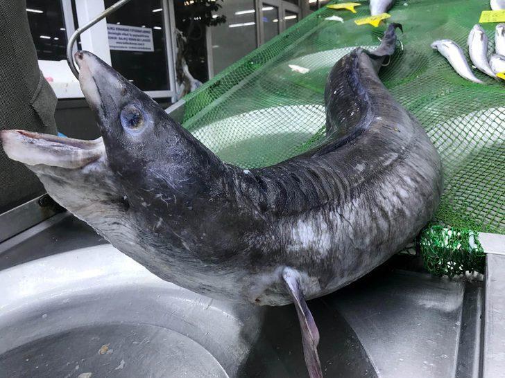 3 metre boyundaki dev yılan balığı görenleri hayrete düşürdü