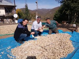 Akkuş şeker fasulyesi yok satıyor! Kilosu 5 liradan 25 liraya çıktı