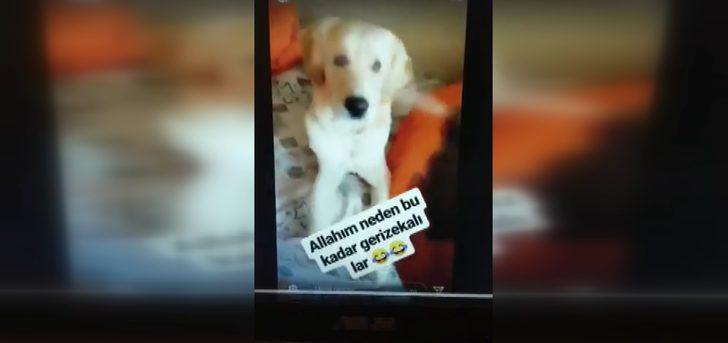 Köpeğine deodorant sıkıp, görüntü paylaşan üniversiteli gence tepki