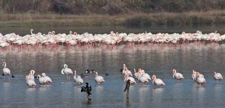 Hersek lagünü göçmen kuşları misafir ediyor
