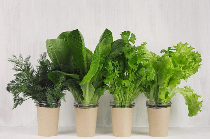 Yeşillikleri taze ve canlı tutun
