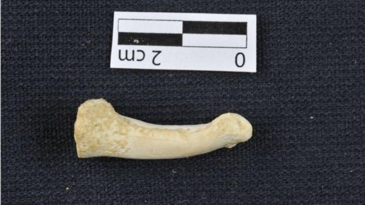 Filipinler'de yeni bir insan türü bulundu