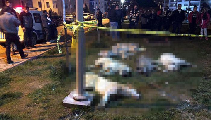 Ankara'da 16 köpeğin zehirlenmesi olayında flaş gelişme