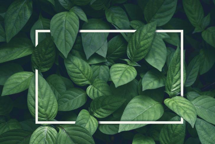 Rüyada yeşillik görmek ne anlama gelir? Rüyada yeşillik görmek ile ilgili rüya tabirleri