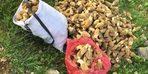 Yağmur yağınca ortaya çıktı, kilosu 200 liradan satılıyor