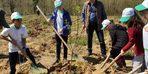 Akçakoca'da 600 kestane fidanı toprakla buluştu