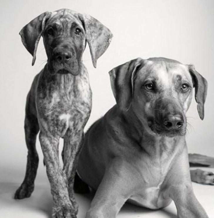 Köpekler nasıl yaşlanır?