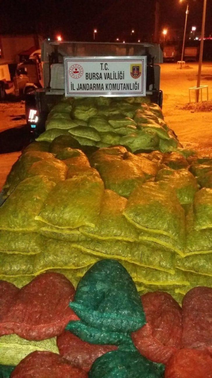 Bursa'da kaçak midye operasyonu