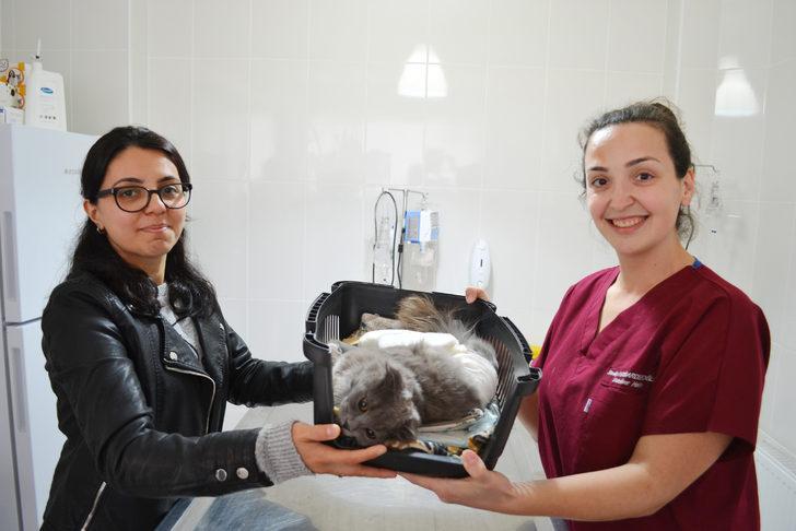 Balkondan düşüp ayağı kırılan kediye ameliyat