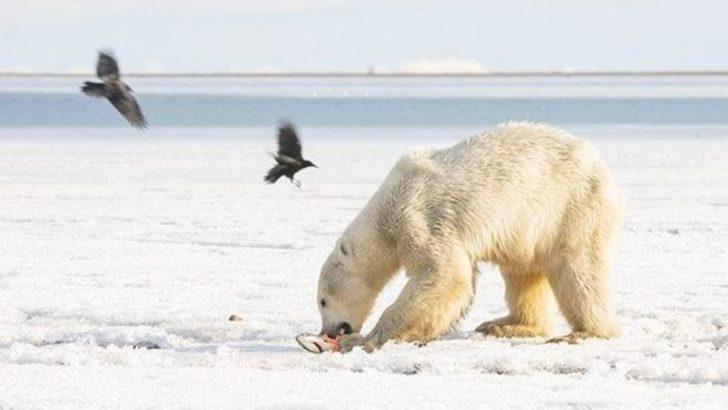 Buz parçasıyla sürüklendi, 700 kilometre uzaklıktaki köye indi