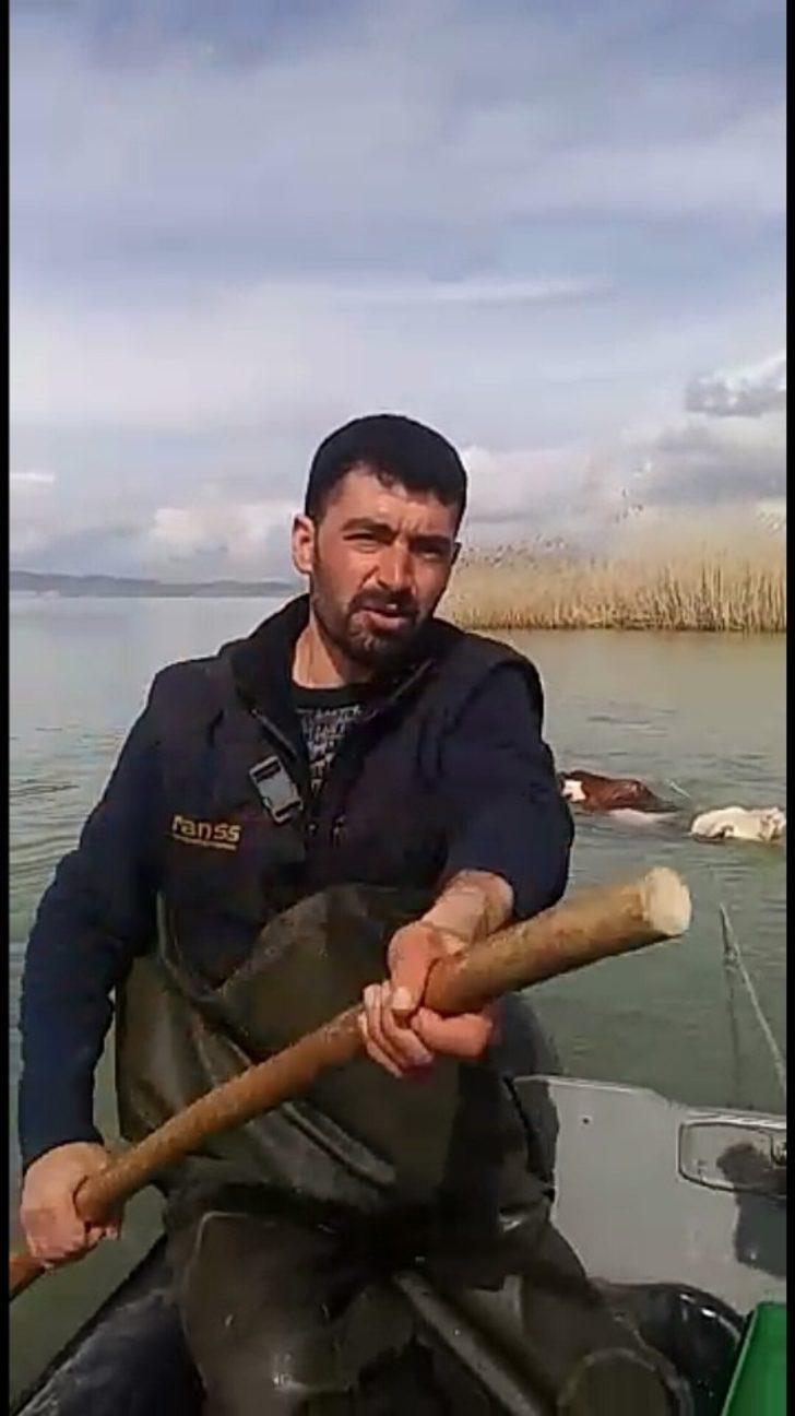 Van'da göle kaçan ineği balıkçılar kurtardı