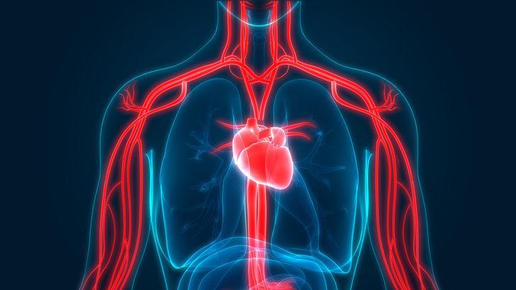 Damar sağlığını korumak için 7 önlem
