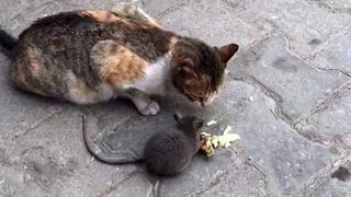 Kedi ile farenin peynir kardeşiliği